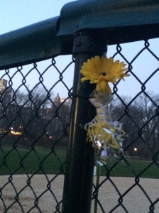 Yellow flower left for dad in his favourite spot, the ball courts in Central Park.